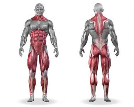 Становая тяга - какие мышцы работают